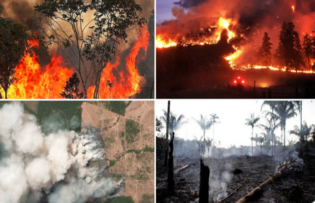 Image result for images of Amazon forest is burning