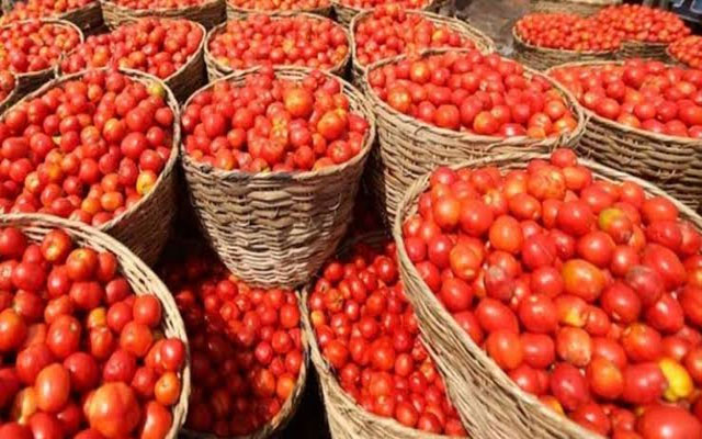 tomatoes import from Iran
