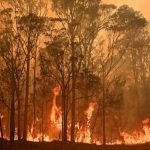 Australia Wildfire Fundraiser Collects $20 Million in 48 Hours