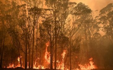 Australia Wildfire Fundraiser
