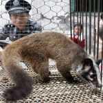 Beijing bans eating, trading wild animals under new regulations
