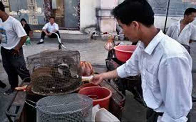 Provinces in China offer breeders money to quit wildlife trading