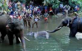 elephant death