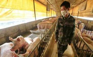 new strain of swine flu in china