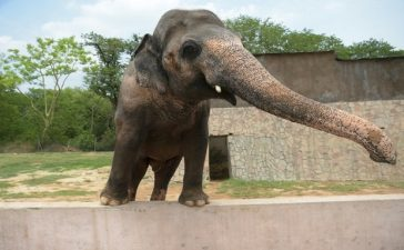 Kavaan Elephant Sanctuary