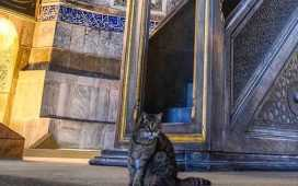 cat living in Hagia Sophia