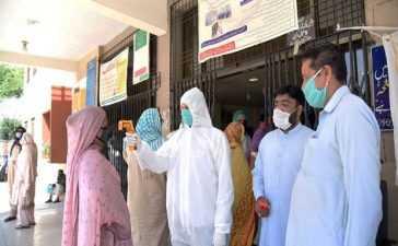 new coronavirus cases in sindh