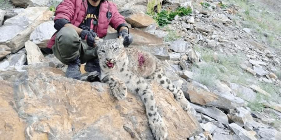 Poacher-holded-leopard-1