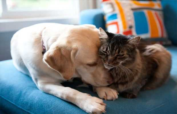 Pets can contract coronavirus from owners, study reveals