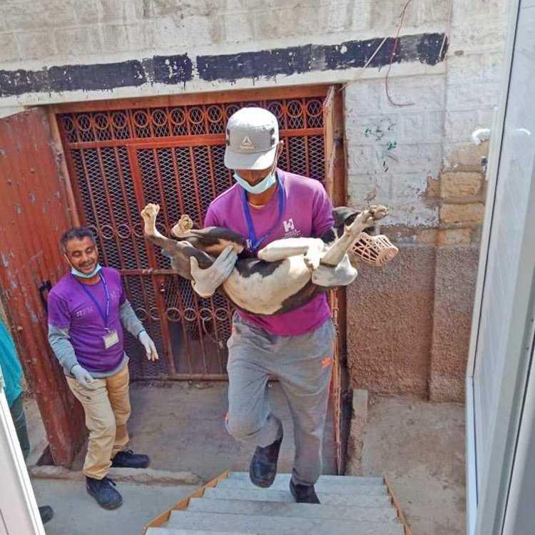 mass dog vaccinations