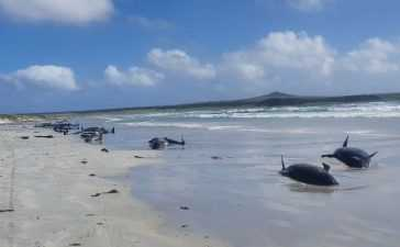 Remote Chatham Islands