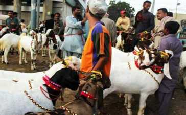 holidays on account of Eid-ul-Adha
